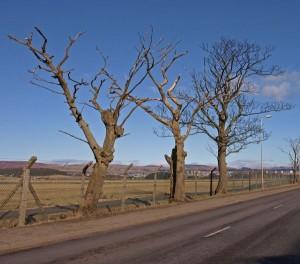 blog-23-dead-trees
