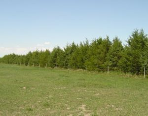 blog-54-windbreak-trees